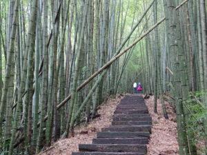 Deux personnes grimpant dans une forêt